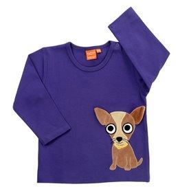 chihuahua, mörklila tröja